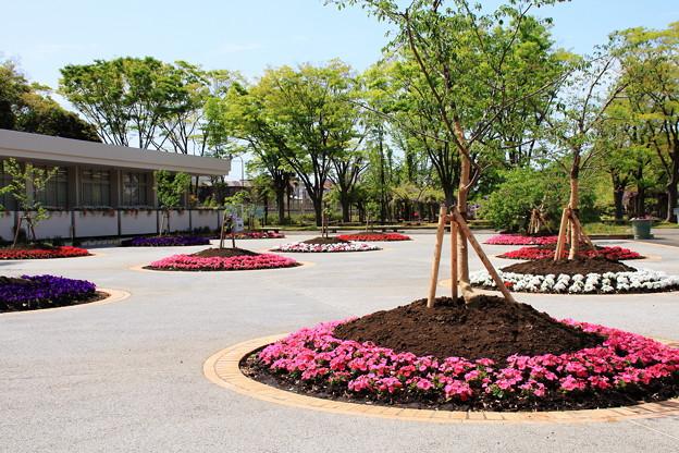 木と花と空間