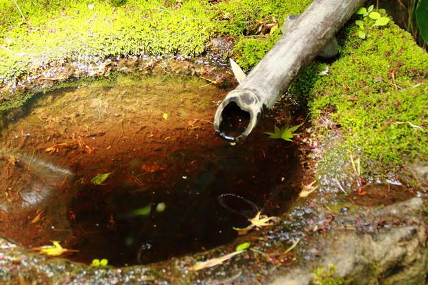 苔の生えた水溜