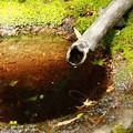 写真: 苔の生えた水溜