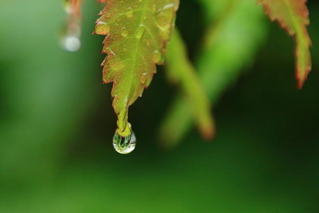 雨の日に2