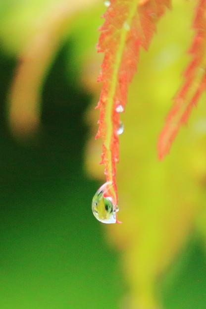 雨の日に3