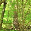 写真: 新緑の中の階段