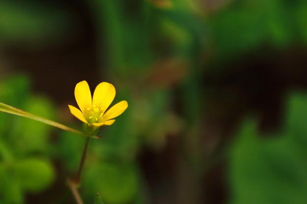 黄色い小さな花