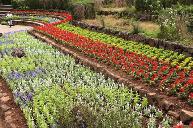 写真: 花壇の植え替え