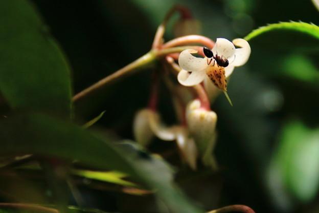 マンリョウの花に訪問者