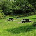 写真: 真夏の公園