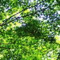 Photos: 夏の日差し