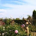 空と薔薇と婦人像