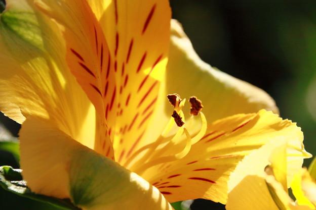 花瓶の花3
