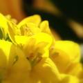 花瓶の花4