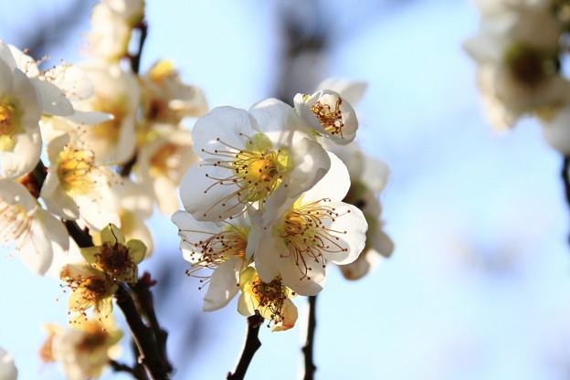 花の薫り漂うよう