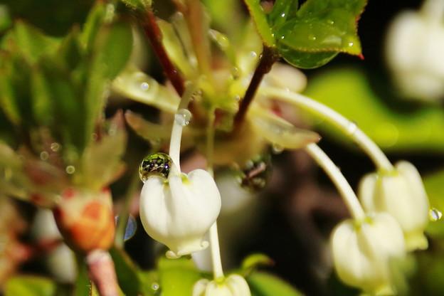花の上に一滴