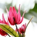 Photos: パボニア グレディリー