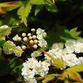 Photos: 楓の中に