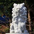 Photos: 子持ちの狛犬(新)