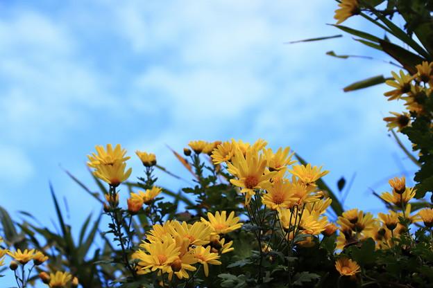 青空と秋の花