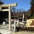 Photos: 今年は亥(いのしし)年。