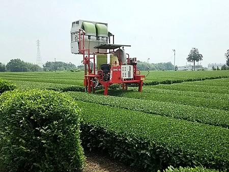 鈴鹿のお茶畑。
