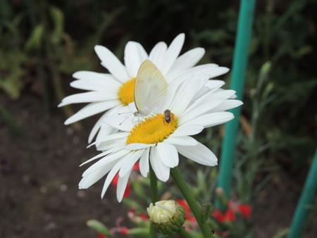 花と蝶とミツバチと。