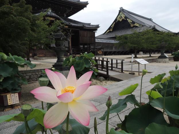 高田本山専修寺。