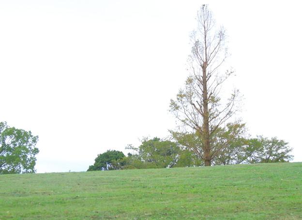風の吹く丘