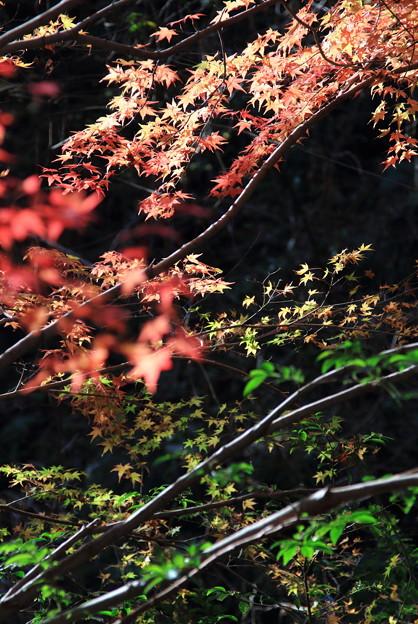秋から冬へのグラデーション