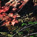 写真: 秋から冬へのグラデーション