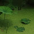 Photos: 緑色の空間