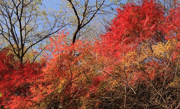 秋色のキャンバス!