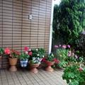 6月の風雨に耐えていたお花たちも・・・!