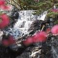 写真: 熱海梅園180224-04