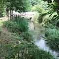 向島用水親水路