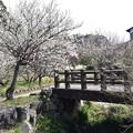 写真: 梅園 2