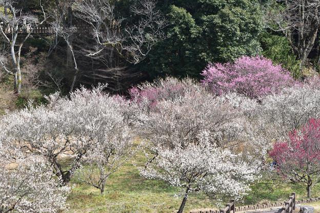 写真: 梅園 3