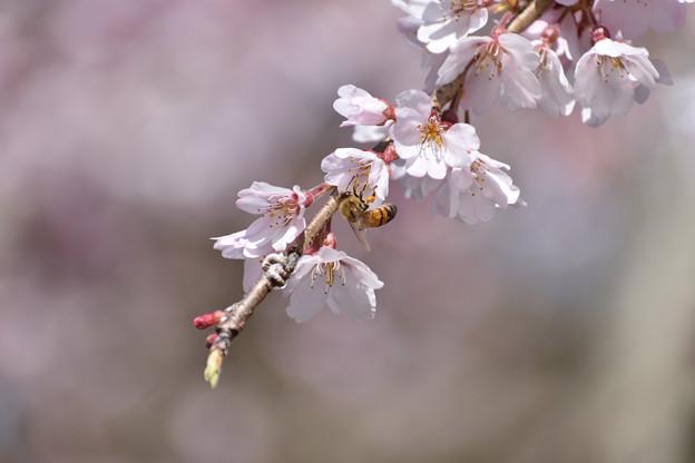 ミツバチ 2