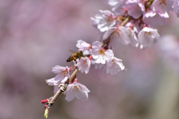 ミツバチ 3