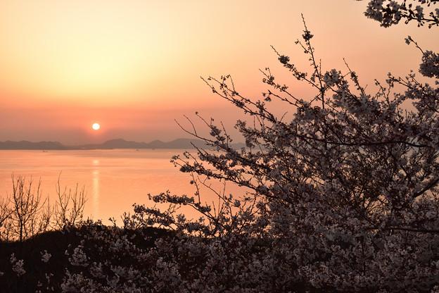 桜と夕日 2