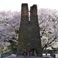 萩反射炉の桜 1