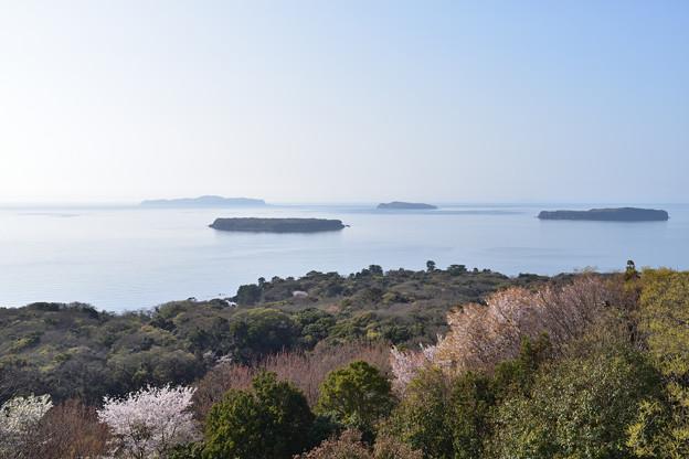 写真: 笠山椿群生林