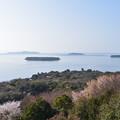 Photos: 笠山椿群生林