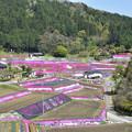 写真: 芝桜の棚田