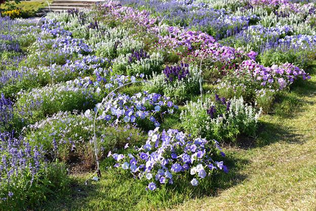 花の谷ゾーン 3