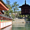 Photos: 釣灯籠