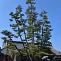 写真: 大願寺