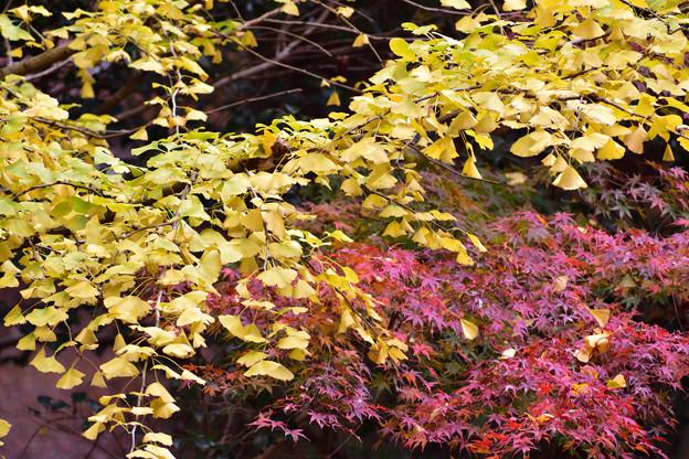 Photos: 黄と赤