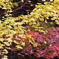 写真: 黄と赤