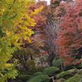 Photos: 落葉の森