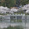 Photos: 鴨たちの花見