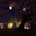 錦帯橋夜桜