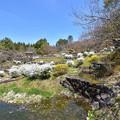 ユキヤナギの咲く丘